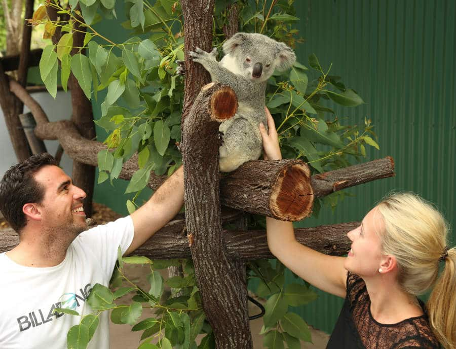 Port Douglas Private Tour - Your Private Wildlife Tour