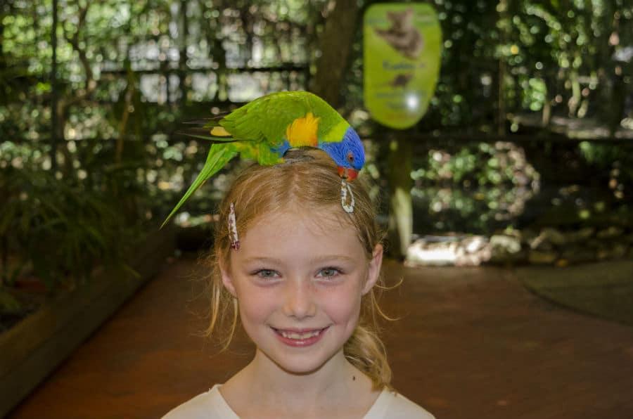 Wildlife Tours Port Douglas _Wildlife Habitat Bird Interactive Experience