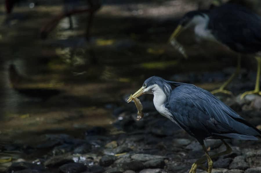 Wildlife Tours Port Douglas _Wildlife Habitat Wetlands Feeding Tour