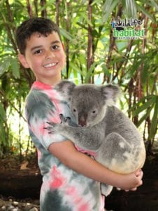 Koala cuddle experience at Wildlife Habitat