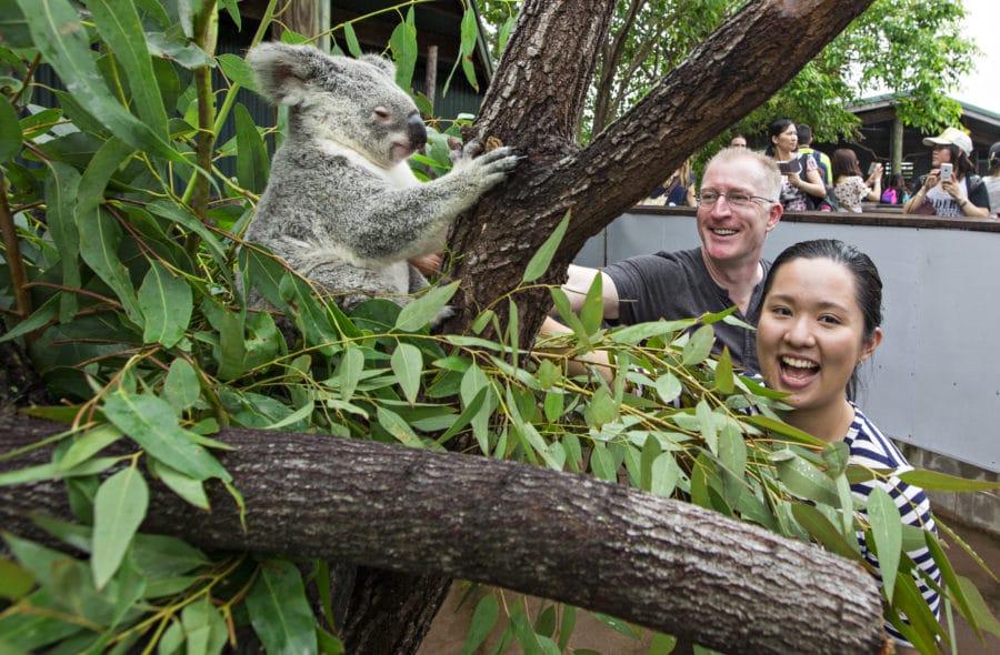 YOUR Wildlife Habitat - interactive koala experience