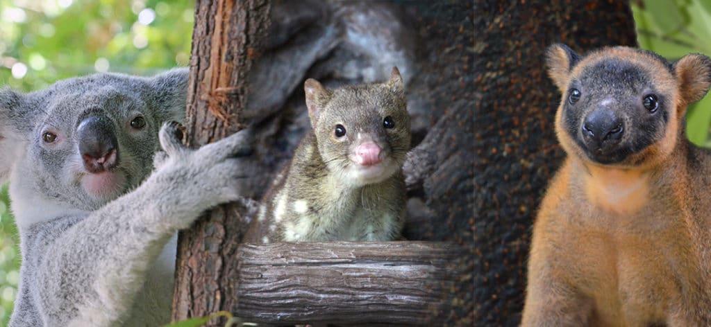 Adopt An Animal Wildlife Habitat