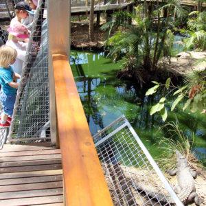 wildlife habitat port douglas predator plank