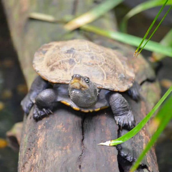 turtle feeding tour freshwater turtle on log