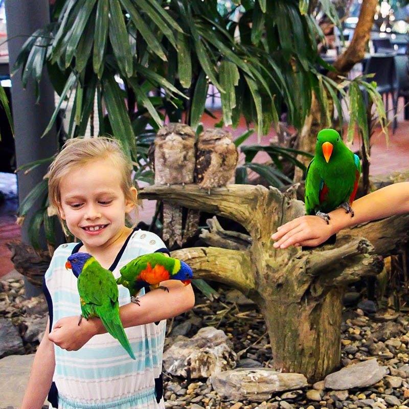 little girl holding birds interactive bird session wildife habitat port douglas
