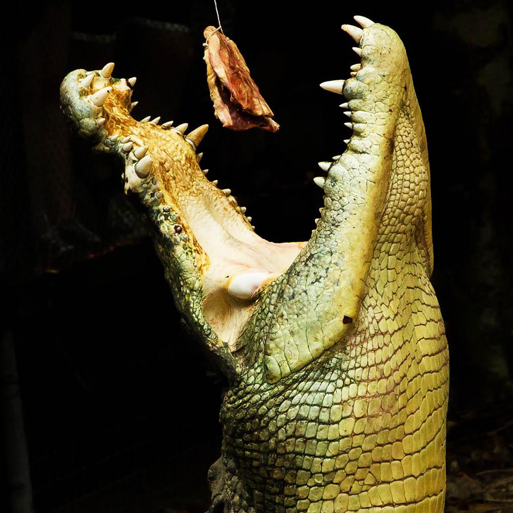 Reptiles Wildlife Habitat Port Douglas