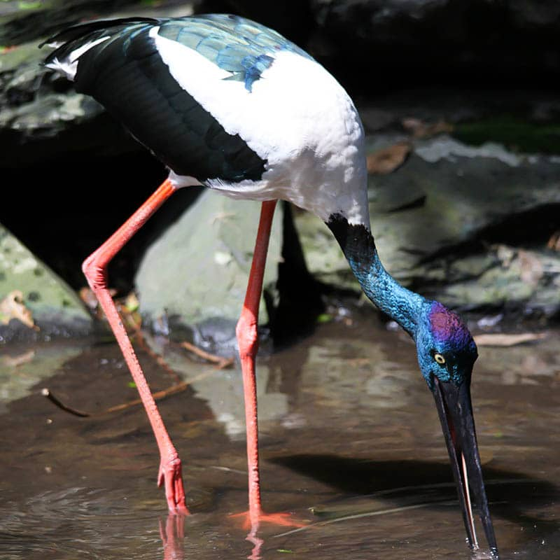 wetlands feeding tour wildlife habitat port douglas